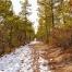 """Frozen Forest"" (Jakes Branch County Park-Beachwood, NJ)"