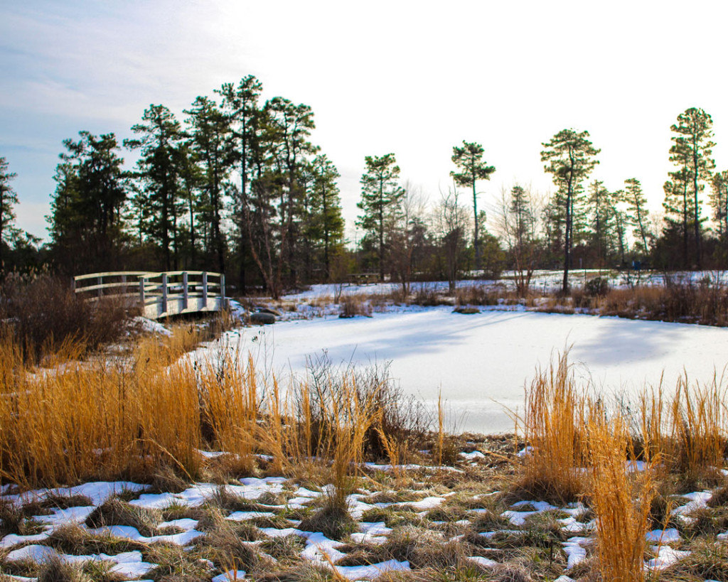 """""""The Warmth of Winter"""" (Jakes Branch County Park-Beachwood, NJ)"""